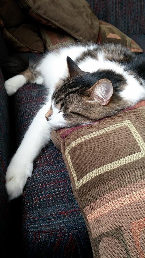 Ripetitore sonnolento il gatto nekochan fotografie stock libere da diritti