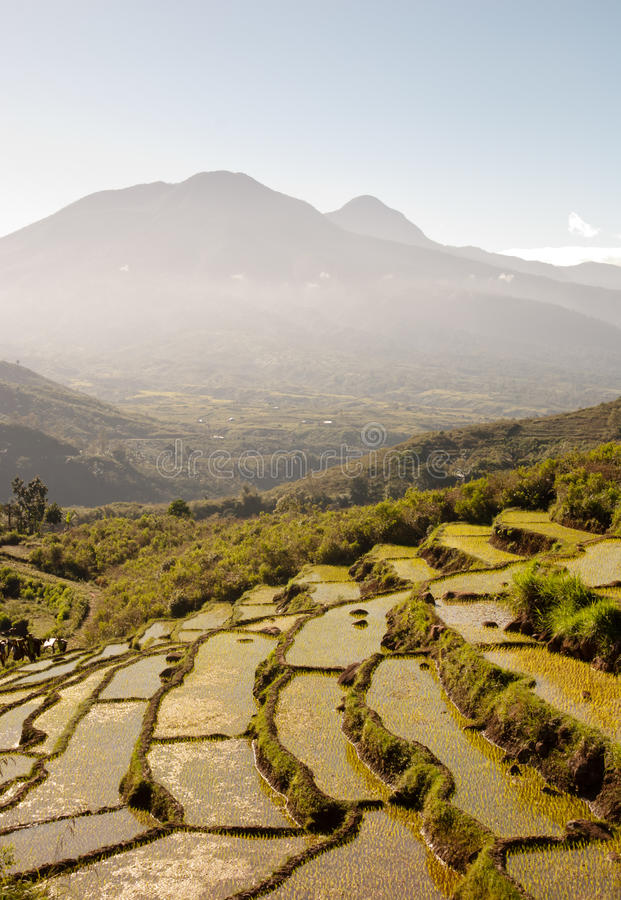 Ripid terraced rice field stock photos