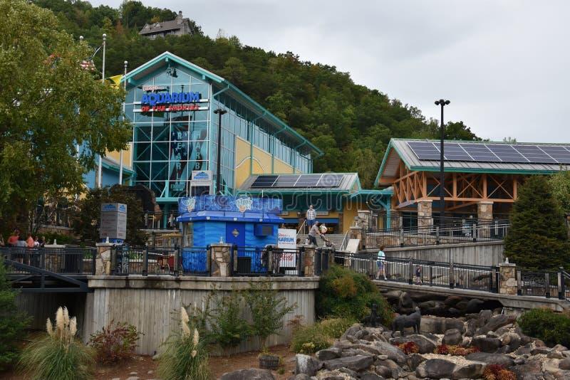 Ripleysaquarium van Smokies in Gatlinburg, Tennessee stock afbeeldingen