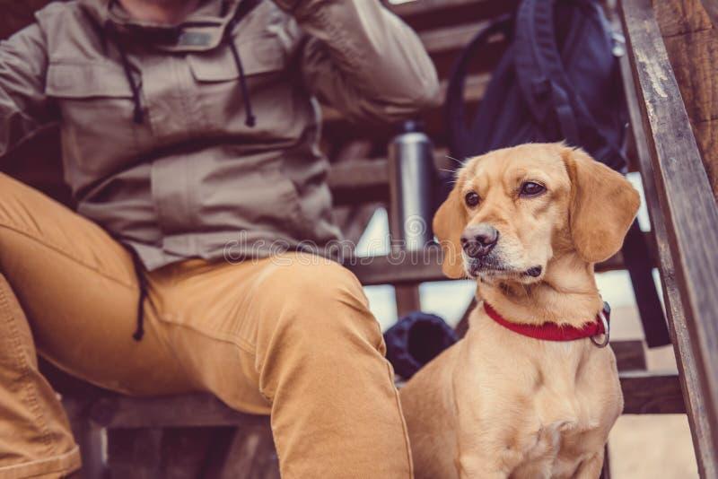 Riposo del cane e della viandante immagine stock for Scala a chiocciola della cabina