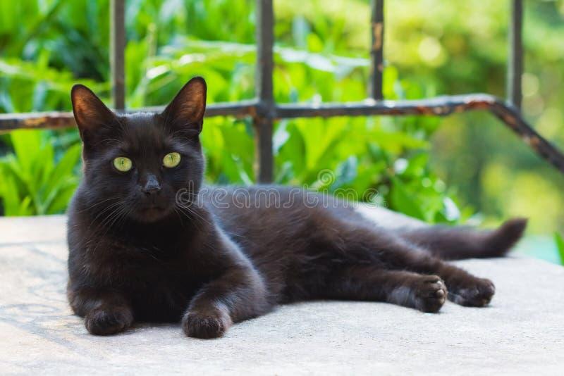 Riposo del gatto nero fotografia stock libera da diritti