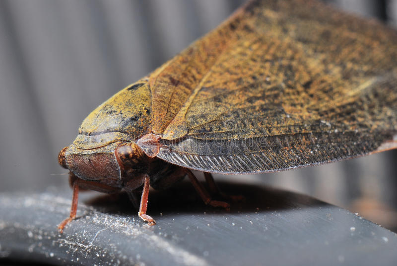 Riposo del lepidottero fotografia stock libera da diritti