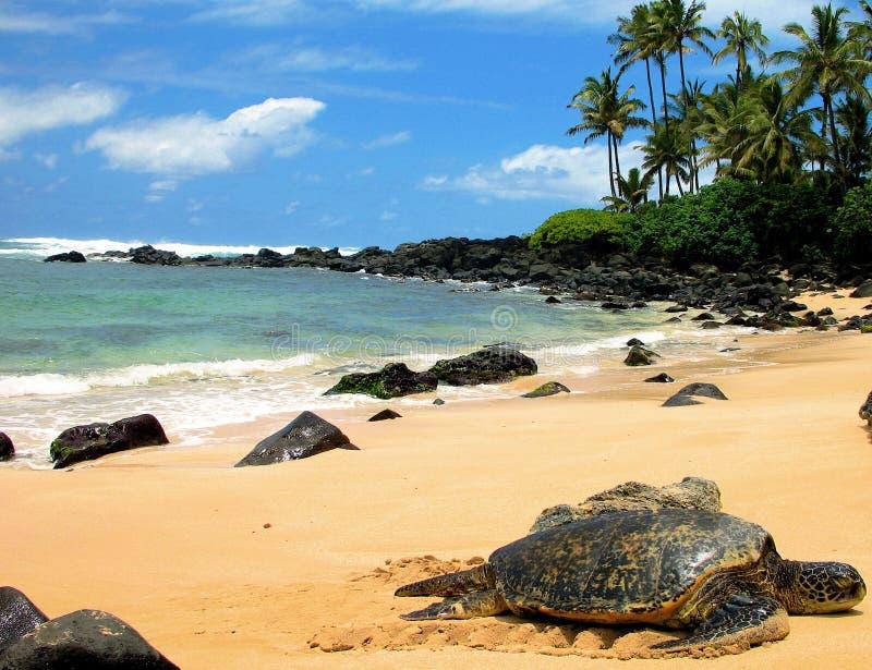 Riposo della tartaruga di mare fotografia stock libera da diritti