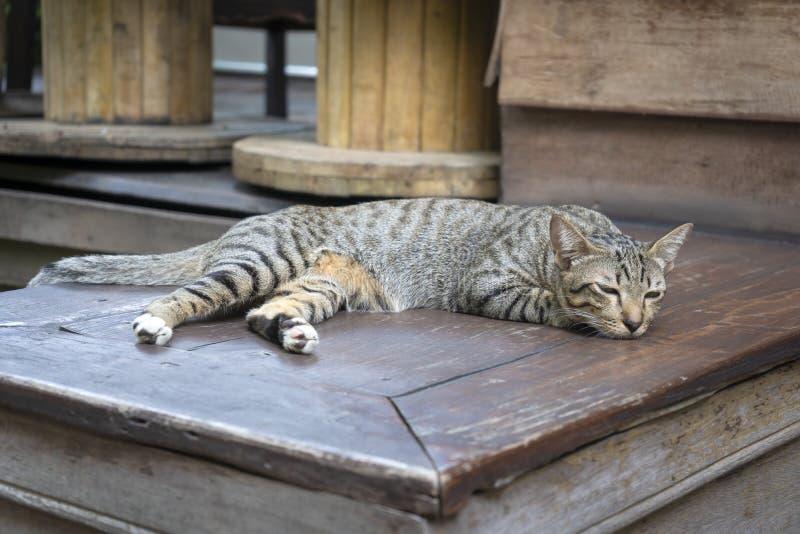 Riposo di menzogne sveglio sonnolento adorabile di Ginger Cat rilassato a casa immagini stock libere da diritti