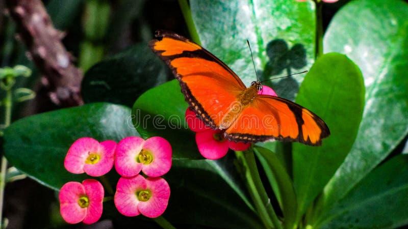 Riposo sbalorditivo della farfalla immagini stock libere da diritti