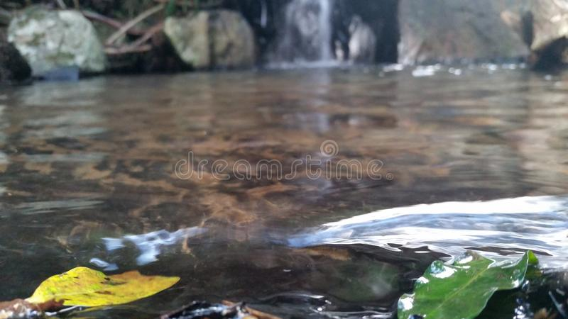 Ripple in the Water stock images