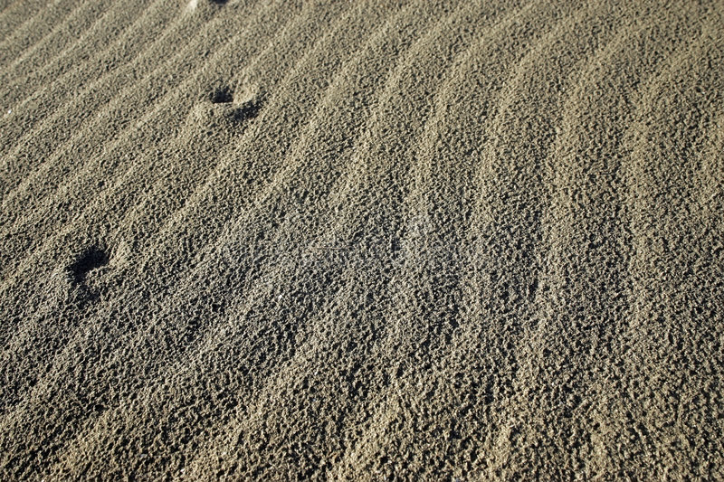 Download Ripples in dry sand stock photo. Image of grey, landscape - 3910120