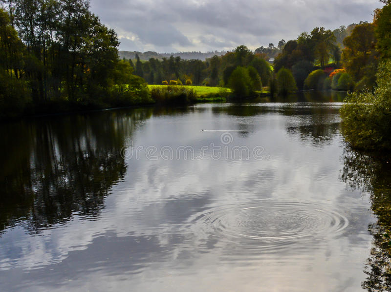 Ripples. This picture was taken at Winkworth Arboretum in early October 2014, just as a fish had broken the water creating a beautiful ripple royalty free stock photos