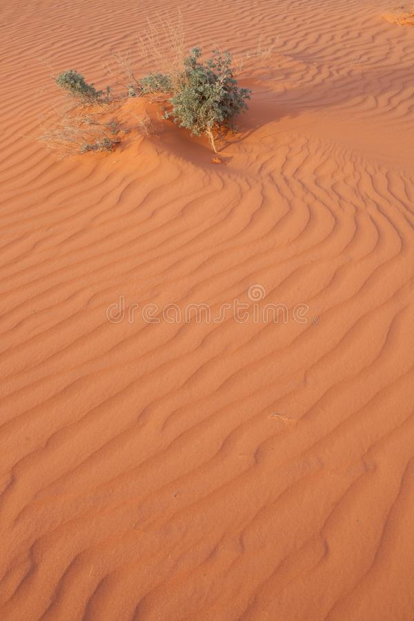 Ripples in wind blown sand and desert bush lit my early morning sun royalty free stock images