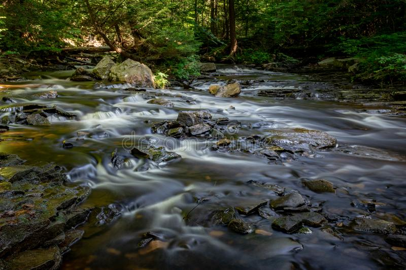 Rippling Brook in the Forest royalty free stock image