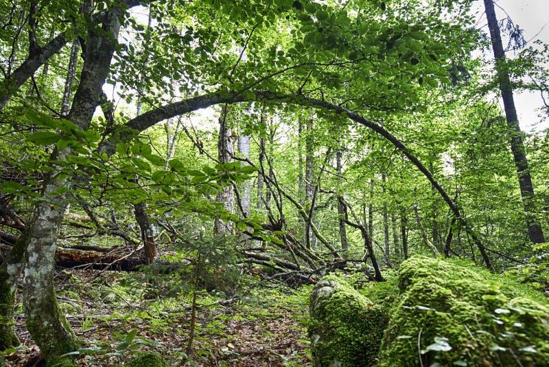 Ripresa ad angolo basso di una bellissima foresta con foglie verdi durante il giorno fotografia stock libera da diritti
