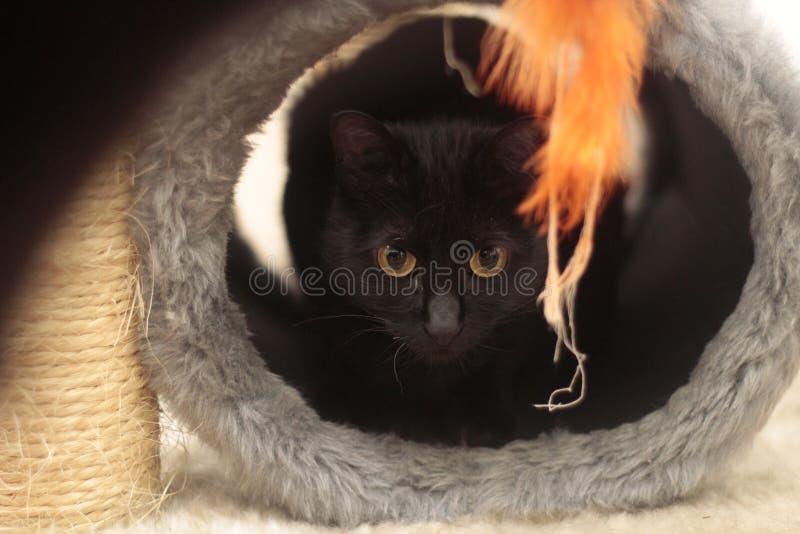 Rire blanc de chat photographie stock