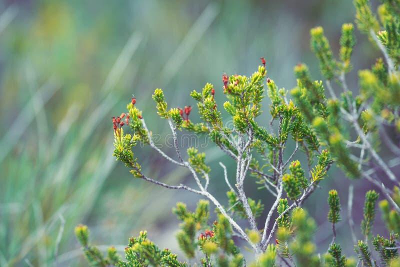 Ris för grön växt med visare royaltyfria bilder