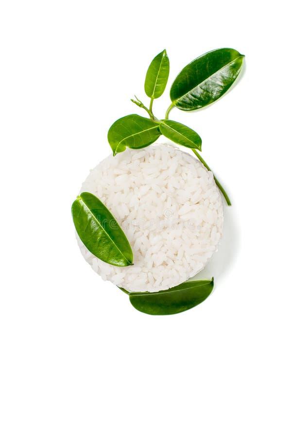 Ris och sidor av en ung grön växt på en vit bakgrund fotografering för bildbyråer