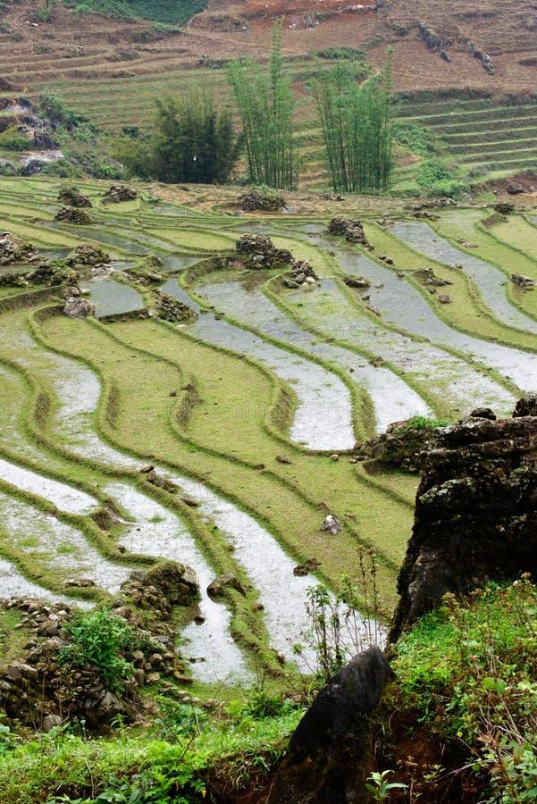 Ris terrasserar i Sa-PA-dalen, Vietnam royaltyfri fotografi