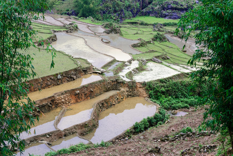 Ris terrasserar i våren, Sapa, Vietnam royaltyfri fotografi