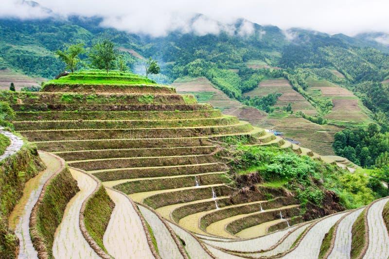 Ris terrasserar landskapet i Longsheng, Guilin område, den Guangxi provinen royaltyfria foton