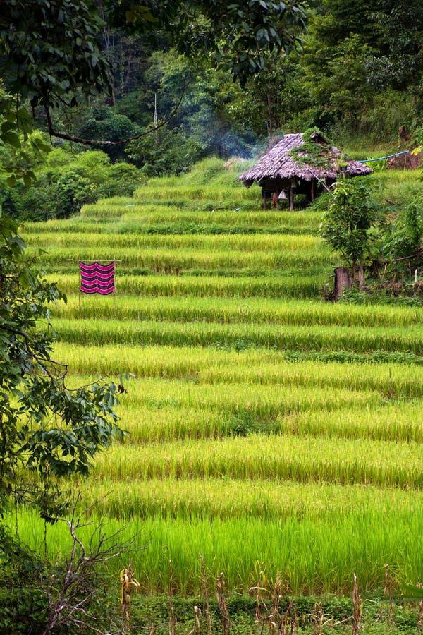 Risaia di riso tailandese della giungla fotografie stock