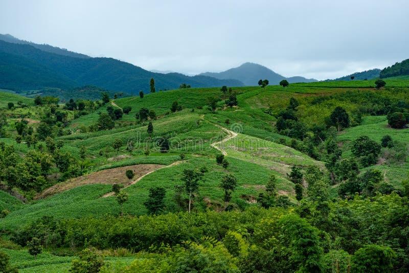 Risaia nella bella vista del paesaggio di Longsheng delle risaie dei terrazzi del riso fotografia stock