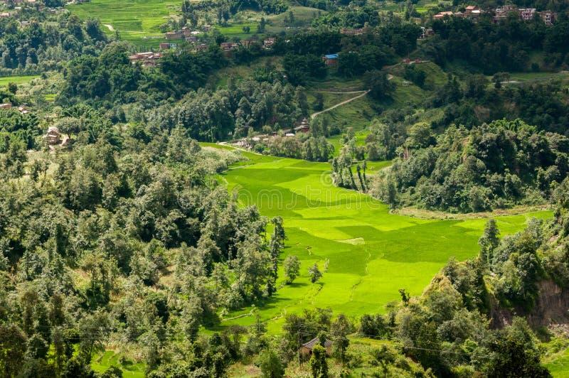 Risaie del Nepal nella valle di Kathmandu immagine stock