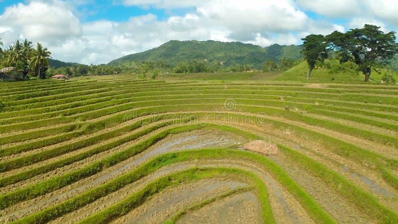 Risaie filippine Viste aeree Bella natura Isola di Bohol immagini stock