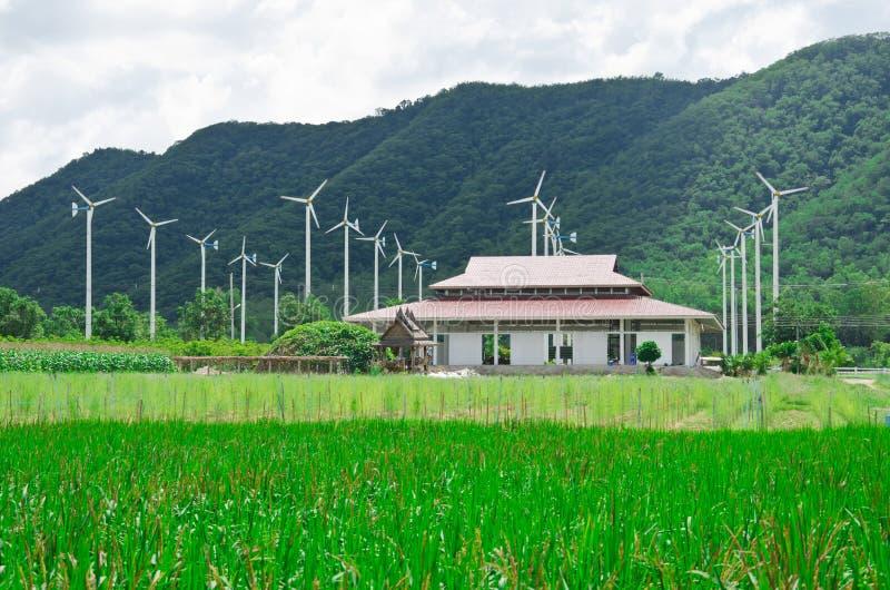 Risaie, piantagioni della bacca, ambiti di provenienza verdi, generatori eolici e montagne immagini stock