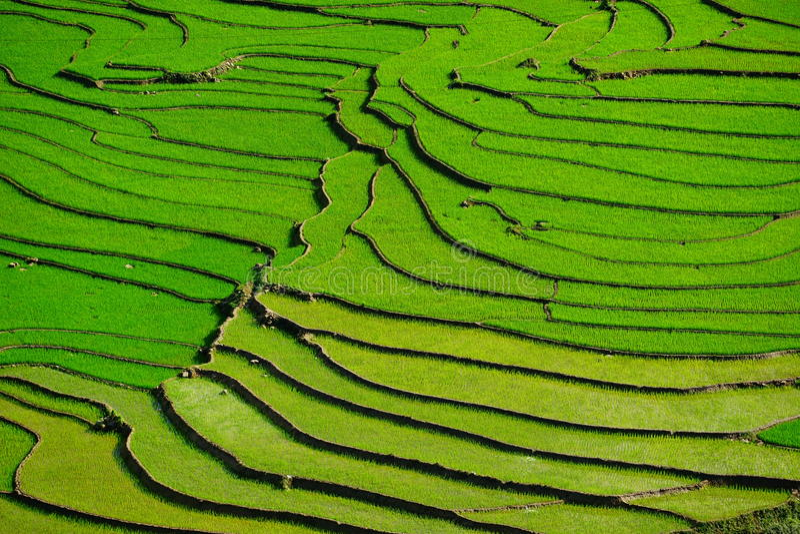 Risaie su a terrazze nella stagione rainny a SAPA, Lao Cai, Vietnam fotografia stock libera da diritti