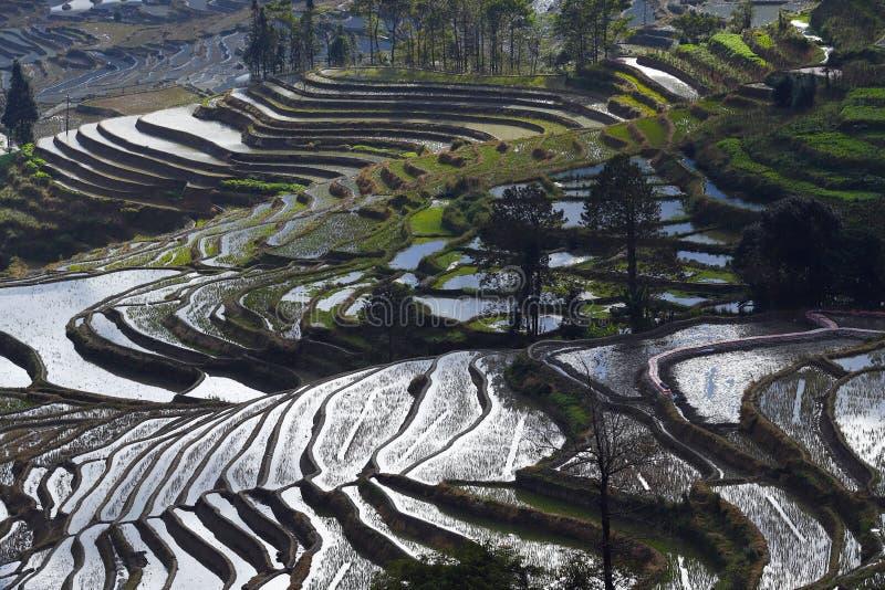 Risaie a terrazze del Yunnan, Cina fotografia stock libera da diritti