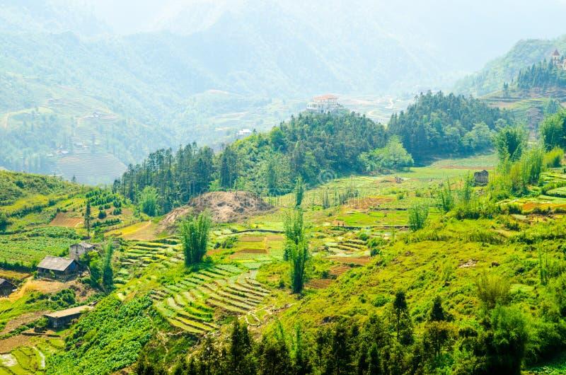 Risaie a terrazze nel Vietnam. Bellezza di Sud-est asiatico fotografia stock
