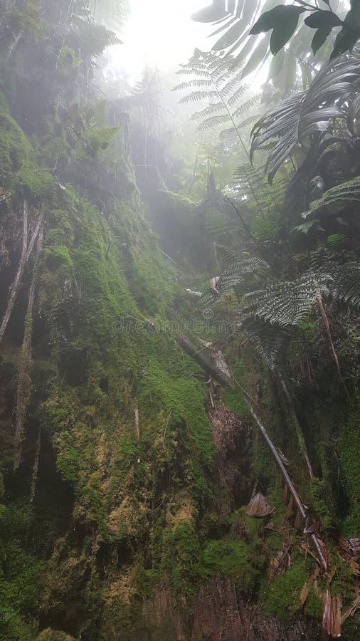 Risaralda Колумбия стоковая фотография rf