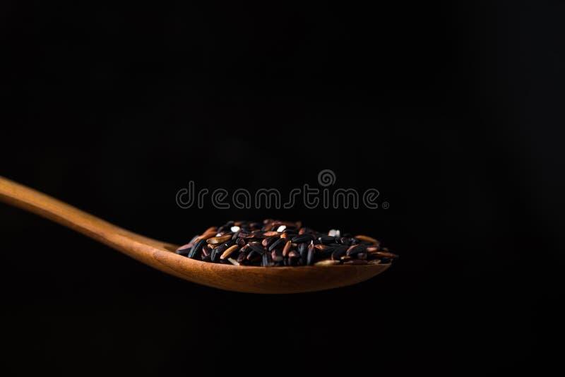 Risbär i träsked arkivfoto