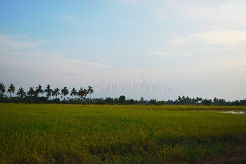 Risbygdlantgård arkivfoto