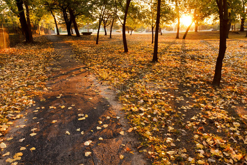 Riscaldi la linea gialla delle foglie di autunno un percorso del parco all'alba fotografia stock libera da diritti