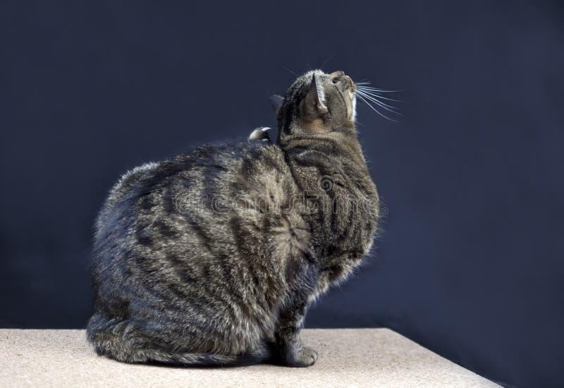 Riscando o gato imagens de stock