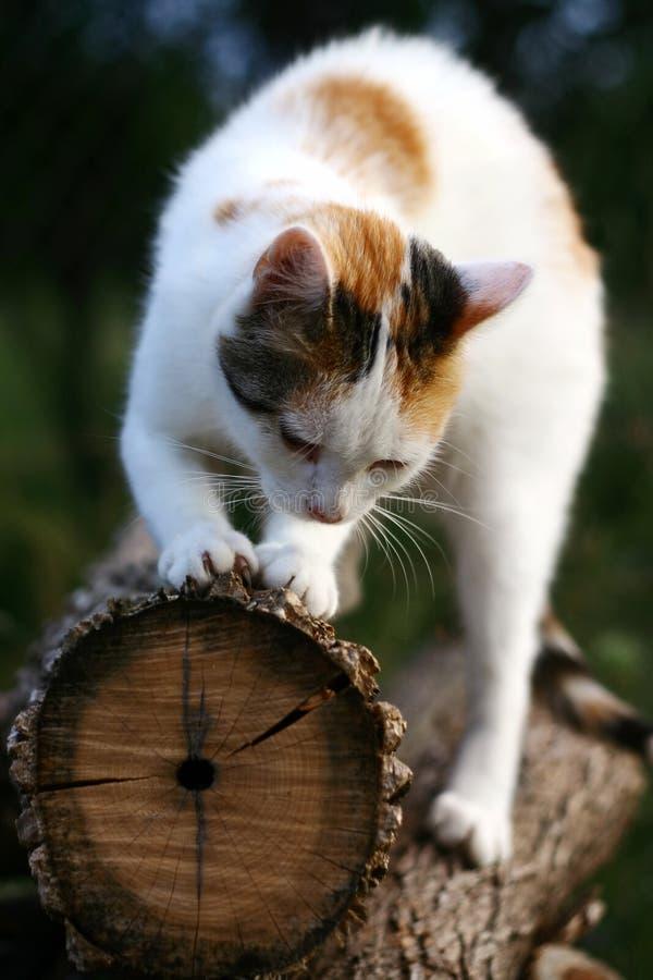 Risco do gato