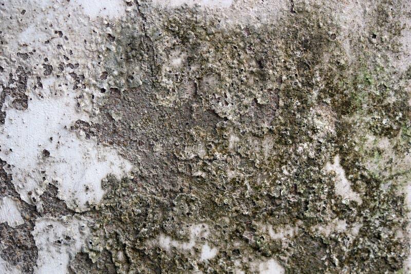 Risco e sujeira da poeira em uma parede imagem de stock royalty free