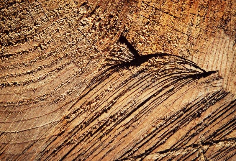 Riscos no felling de madeira imagens de stock royalty free