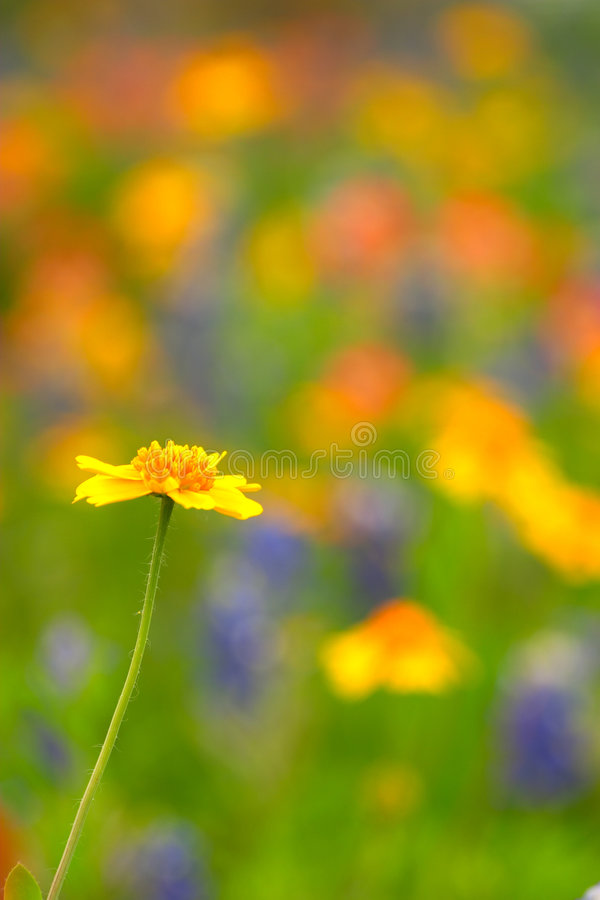 Download Rise Above the Rest stock image. Image of color, flower, paintbrush - 4681