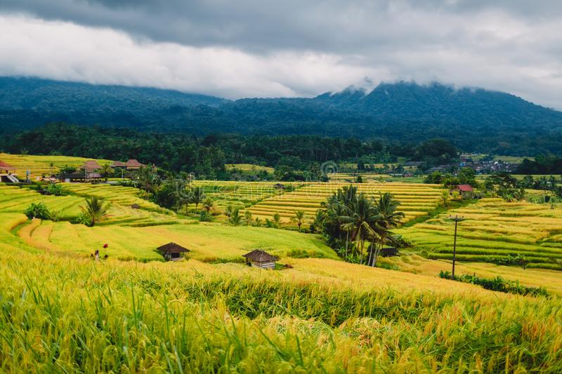 Rise terraces with mountains and clouds in Bali, Indonesia royalty free stock photo