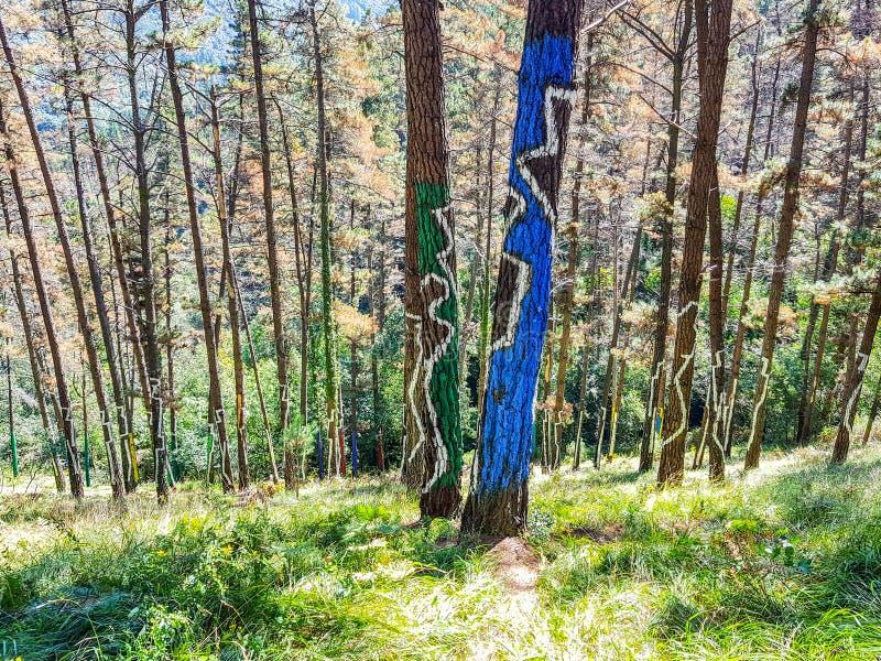 Riserva di biosfera di Urdaibai, Bizkaia, Spagna; 2018-04-16: Tronchi del pino dipinto in EL bosque de Oma fotografie stock libere da diritti