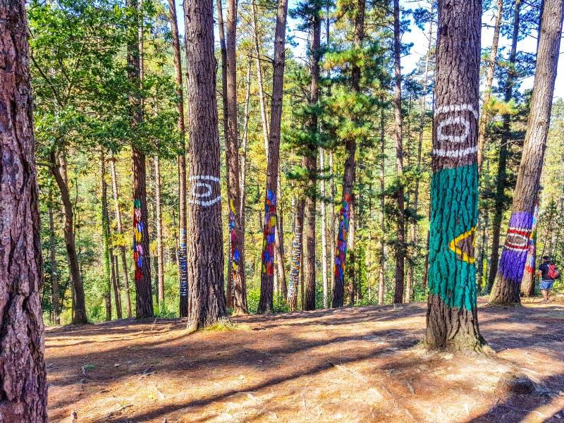 Riserva di biosfera di Urdaibai, Bizkaia, Spagna; 2018-04-16: Tronchi del pino dipinto in EL bosque de Oma immagini stock libere da diritti