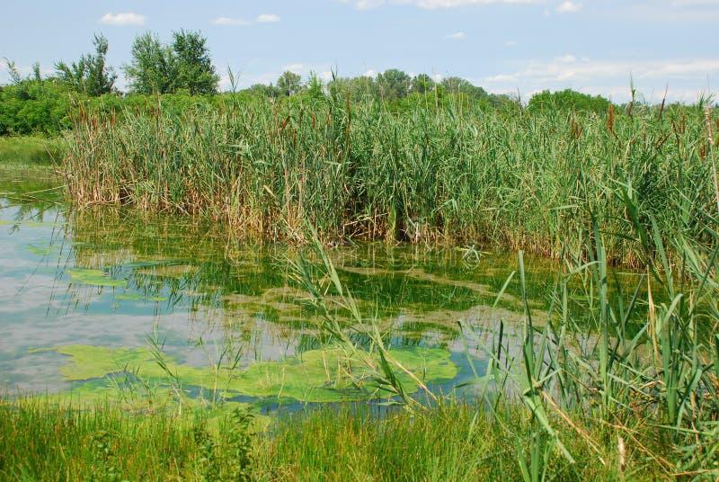 Riserva naturale dell'area umida di Isonzo 9 fotografia stock