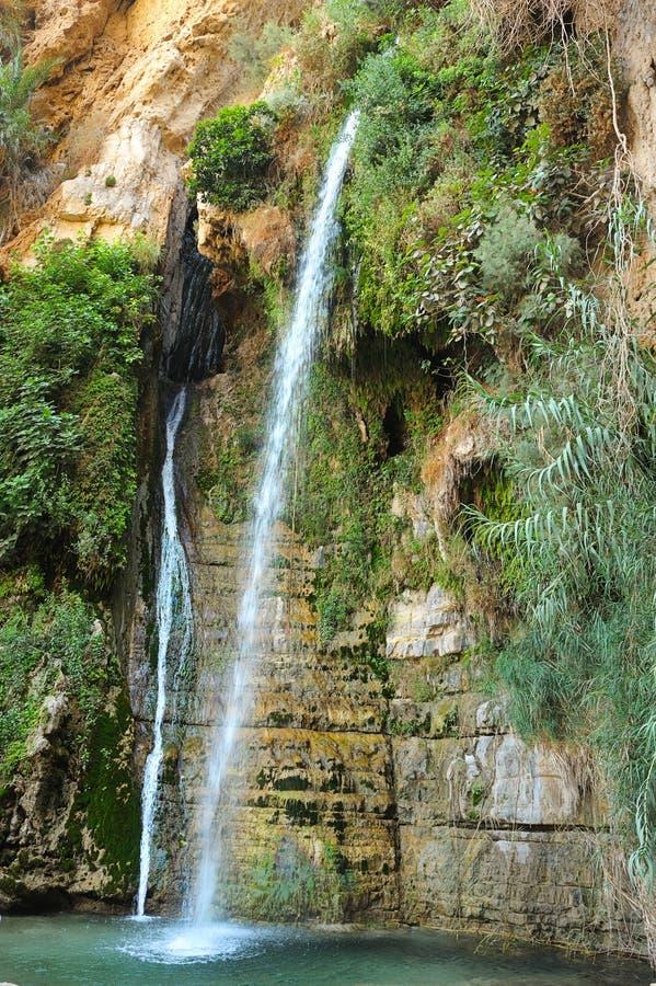 Riserva naturale di Ein Gedi fotografie stock libere da diritti