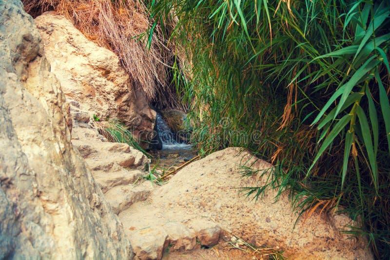 Riserva naturale di Ein Gedi l'israele fotografie stock