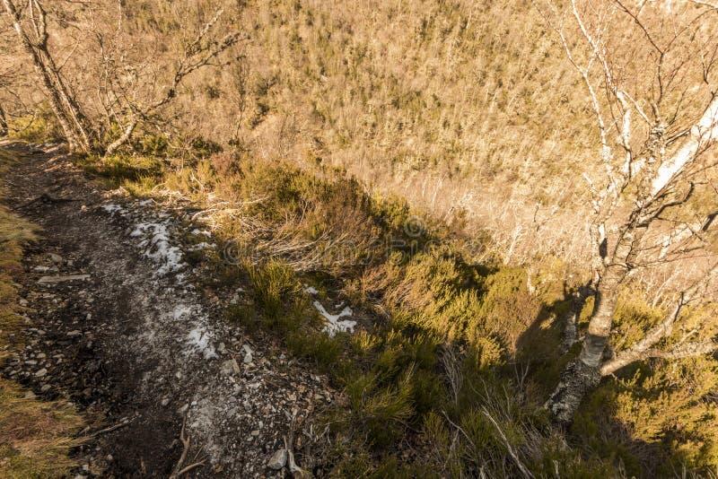 Riserva naturale di Muniellos, Spagna fotografie stock