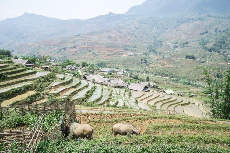 Risfält av Sapa, Vietnam arkivfoton