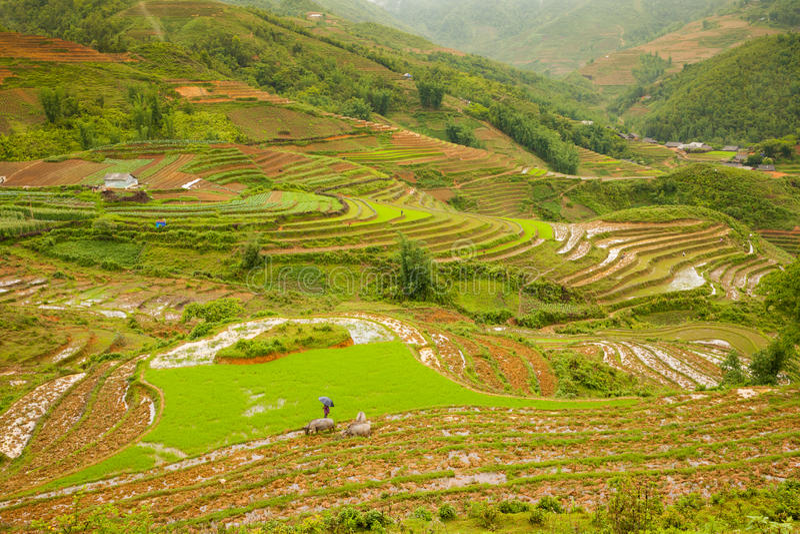 Risfält i bergen, nordliga Vietnam royaltyfria bilder