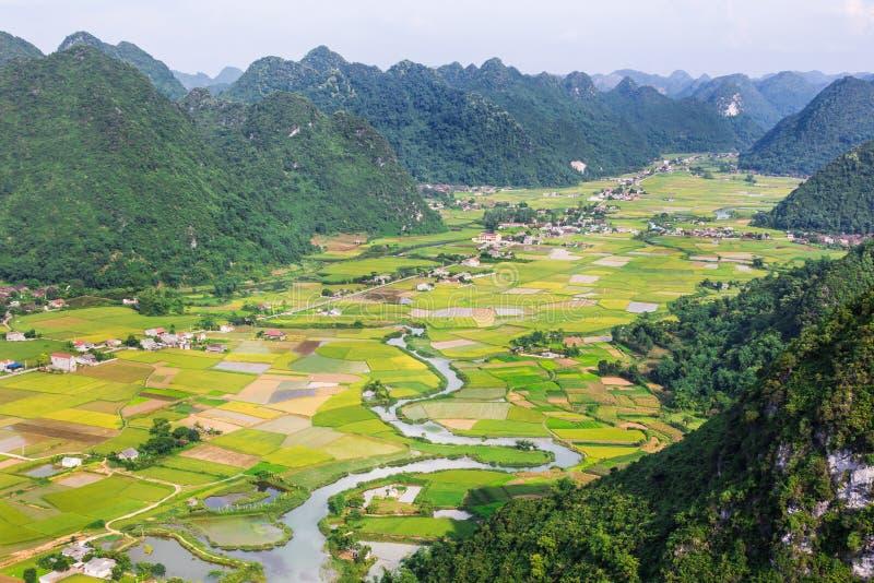 Risfält i dalen i Bac Son, Vietnam arkivfoto