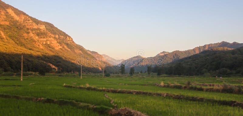 Risfält i Iran med berg och en dal i bakgrunden på solnedgångtid royaltyfria foton