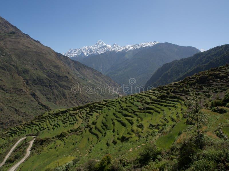 Risfält i Nepal royaltyfria bilder